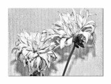 A painterly look with Topaz BW plugin...