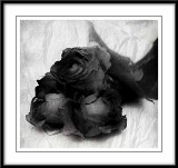 roses in black and white...