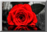 textured,BW and a red rose...