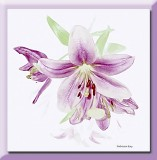 lillies in lilac tones...