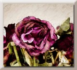 faded roses...