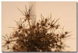 seedheads-3