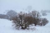 Golan Heights - Snowy 03.03.2012