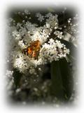 Spring '05