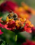 Beezy Bee