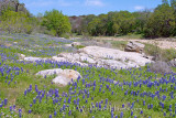 Creekside Bluebonnets
