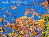 Happy Thanksgiving 2005