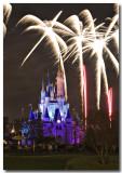 Wishes Palm tree fireworks