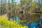 Spring In The Bayou