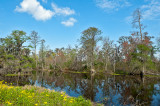 Lovely Day In The Bayou