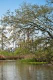 The Bayou Trees