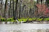 White Egret In The Bayou