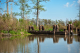 Bayou In March