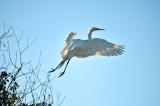 Flight To Blue Sky