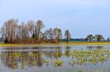 Biebrza River Backwater In Spring