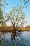 Biebrza River Backwater