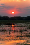 Sunrise At Biebrza River Backwater
