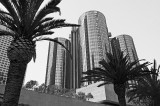 Palm Trees And Architecture