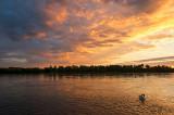 The Swan Sunset