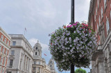 Whitehall Blooms