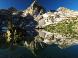 Painted Lady Reflection