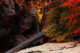 Gift of Zion Autumn Color