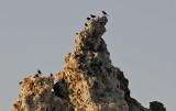 Blackbirds_on_Tufa.jpg