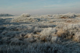 dunes in white frost