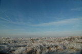 White- frost in North-Holland Dune Reserve