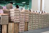 stacks of eggs
