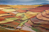 Dongchuan Red Earth