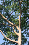 KAENG KRACHAN NATIONAL PARK THAILAND - FOREST SCENES (1).JPG