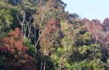 KAENG KRACHAN NATIONAL PARK THAILAND - FOREST SCENES (11).JPG