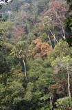 KAENG KRACHAN NATIONAL PARK THAILAND - FOREST SCENES (24).JPG