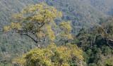 KAENG KRACHAN NATIONAL PARK THAILAND - FOREST SCENES (4).JPG