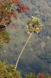 KAENG KRACHAN NATIONAL PARK THAILAND - FOREST SCENES (8).JPG