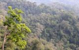 KAENG KRACHAN NATIONAL PARK THAILAND - FOREST SCENES (32).JPG