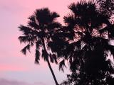 KAENG KRACHAN NATIONAL PARK THAILAND - FOREST SCENES (41).JPG