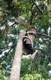 KAENG KRACHAN NATIONAL PARK THAILAND - STRANGLER FIG - FOREST SCENES (30).JPG