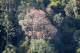 KAENG KRACHAN NP THAILAND - FOREST SCENES (1).JPG