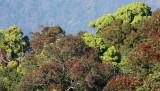 KAENG KRACHAN NP THAILAND - FOREST SCENES (5).JPG