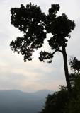 KAENG KRACHAN NP THAILAND - FOREST SCENES (14).JPG