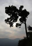 KAENG KRACHAN NP THAILAND - FOREST SCENES (16).JPG