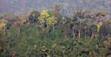 KAENG KRACHAN NP THAILAND - FOREST SCENES (23).JPG