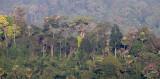 KAENG KRACHAN NP THAILAND - FOREST SCENES (24).JPG