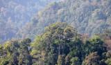 KAENG KRACHAN NP THAILAND - FOREST SCENES (7).JPG