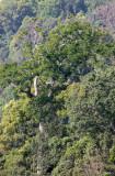 KAENG KRACHAN NP THAILAND - FOREST SCENES (8).JPG
