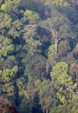 KAENG KRACHAN NP THAILAND - FOREST SCENES (25).JPG