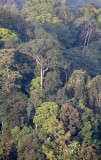 KAENG KRACHAN NP THAILAND - FOREST SCENES (26).JPG