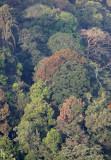 KAENG KRACHAN NP THAILAND - FOREST SCENES (27).JPG